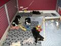 neeva en monalou pups  (7)
